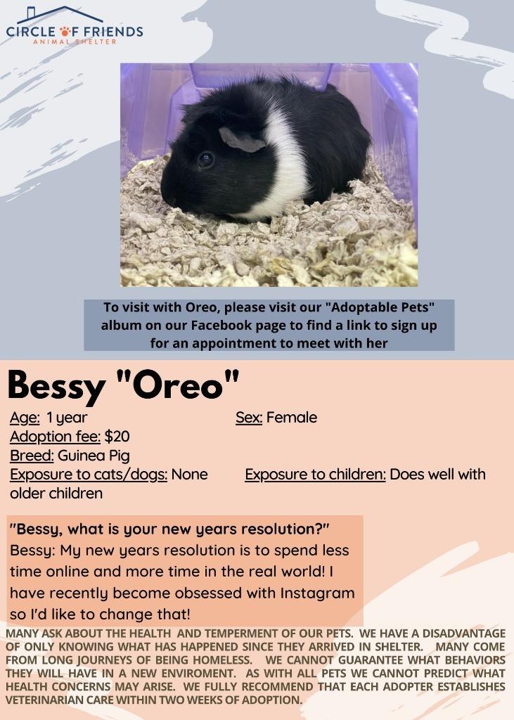 "Bessy ""Oreo"""