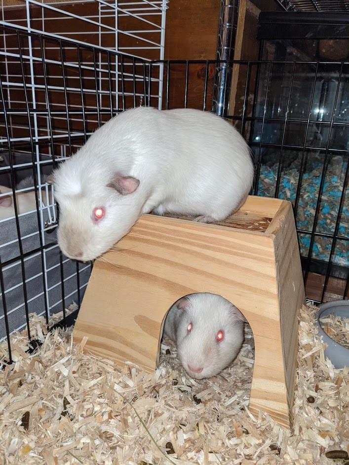 Bean & Frenchie