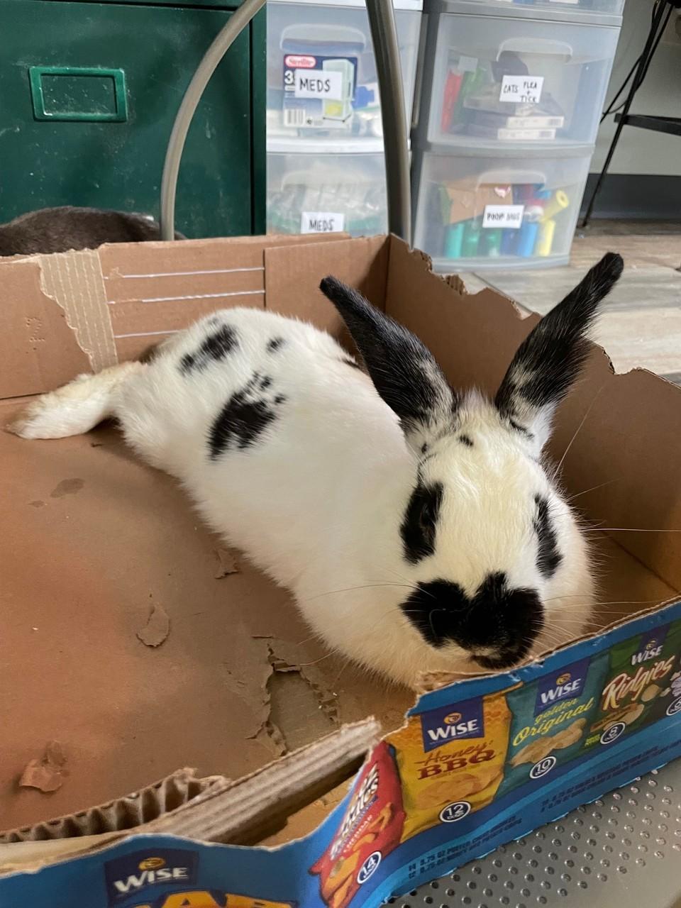 Beau Bunny